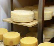 tuscanys best cheesemaker